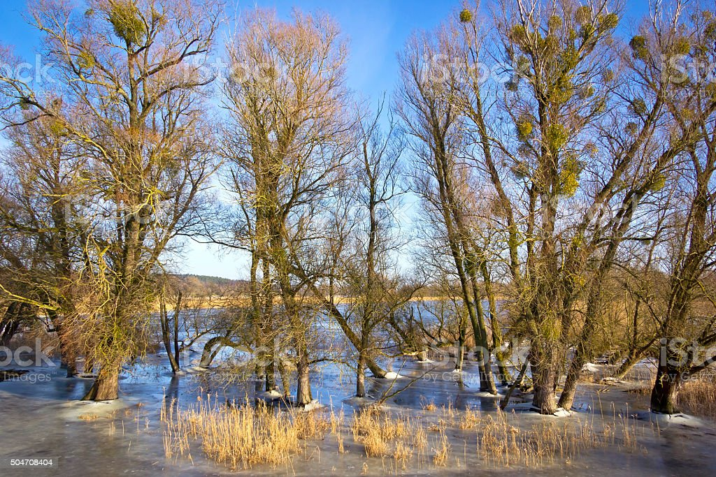 Winter flood at the Oder River in February. stock photo