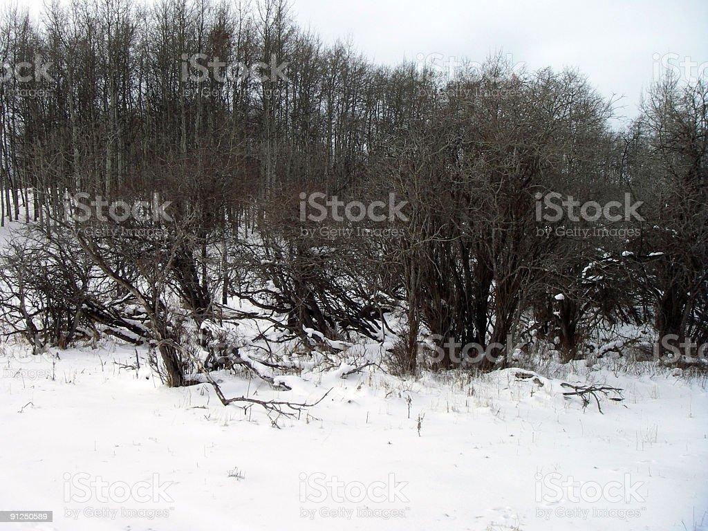 Winter Flora royalty-free stock photo