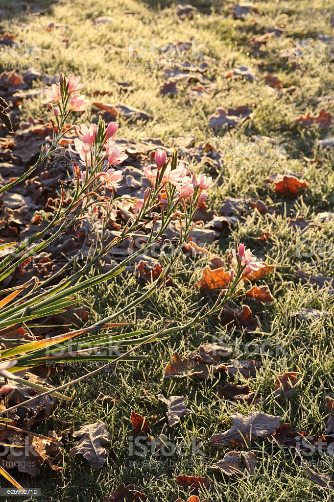 Winter flowers and grass stock photo