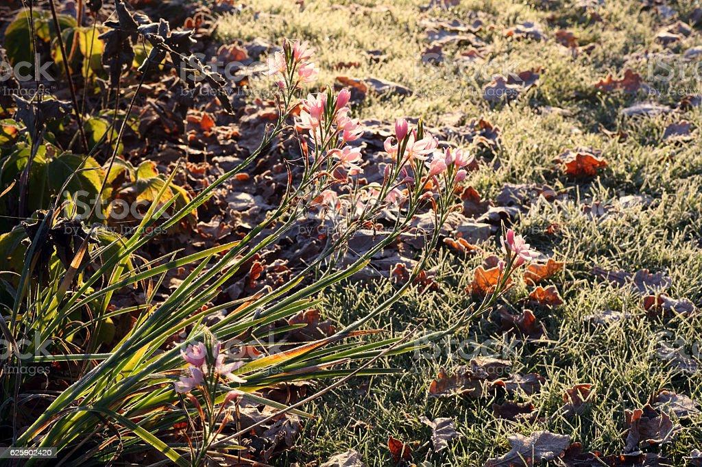 Winter flowers stock photo