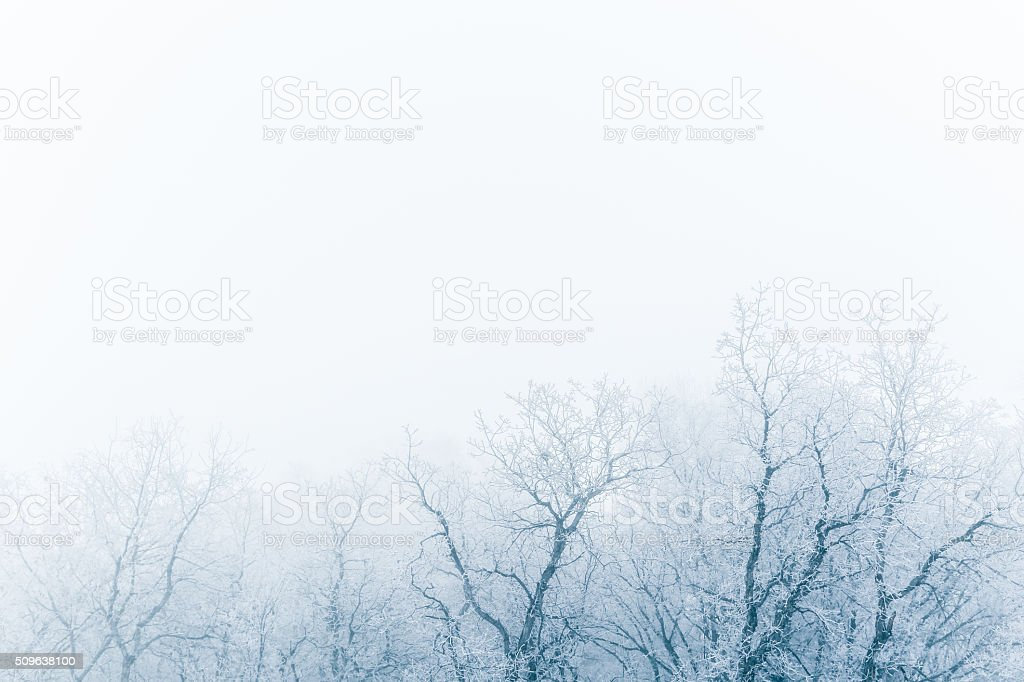 Winter fog stock photo