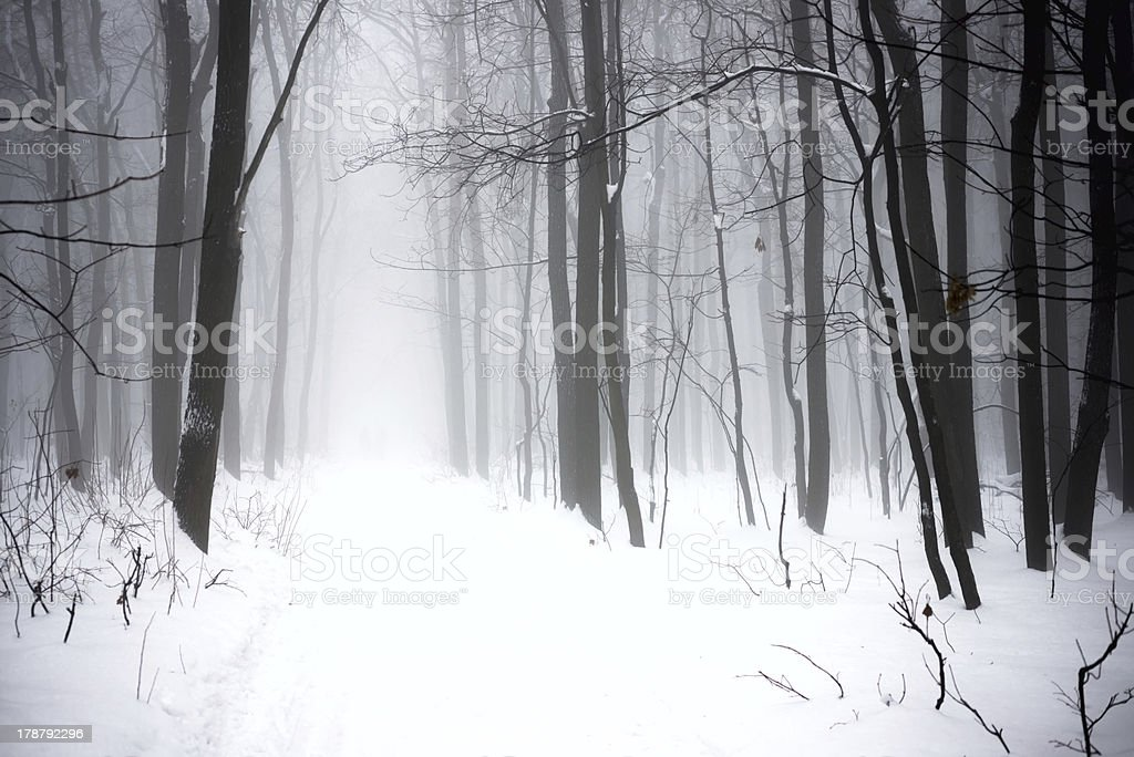 winter foggy forest stock photo