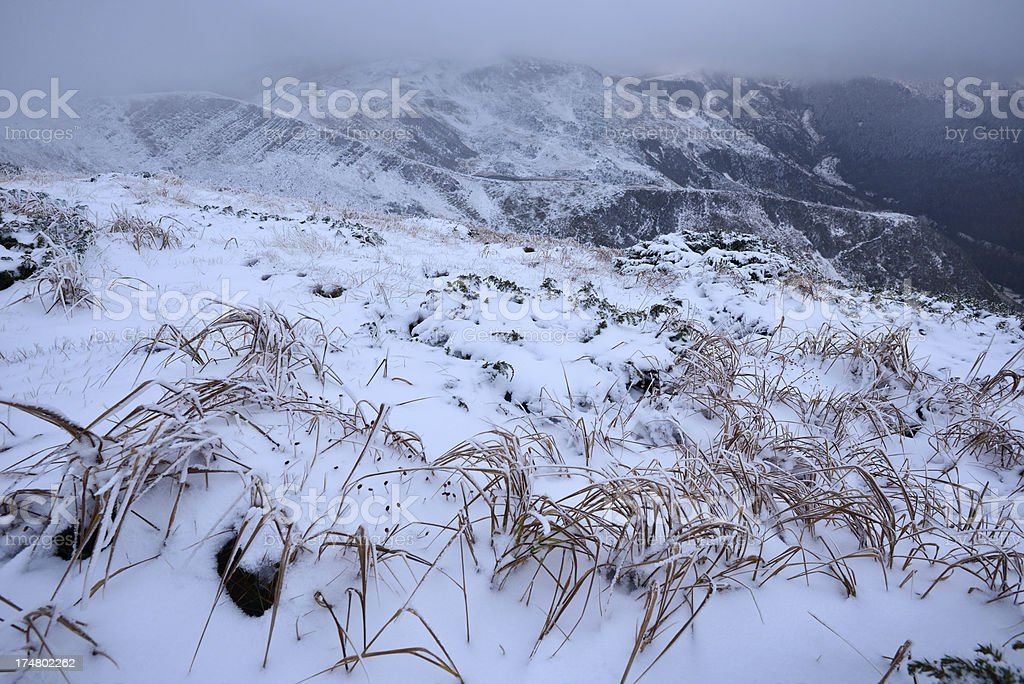 Winter foggy landscape with snow covering grass stock photo