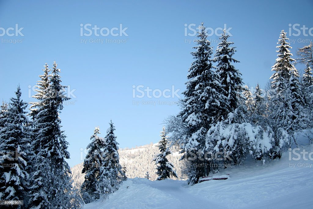 winter forest and sky royalty-free stock photo