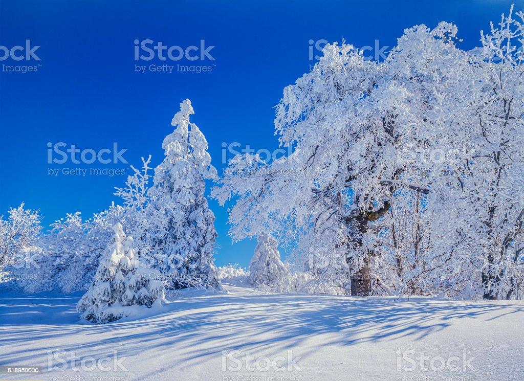 Winter forest at Lake Arrowhead,California stock photo