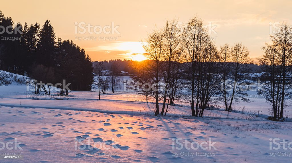 winter forest at sunset stock photo