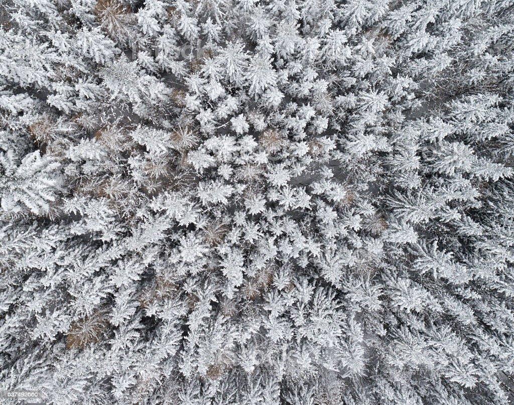 Winter Forest, Bird's-Eye View stock photo