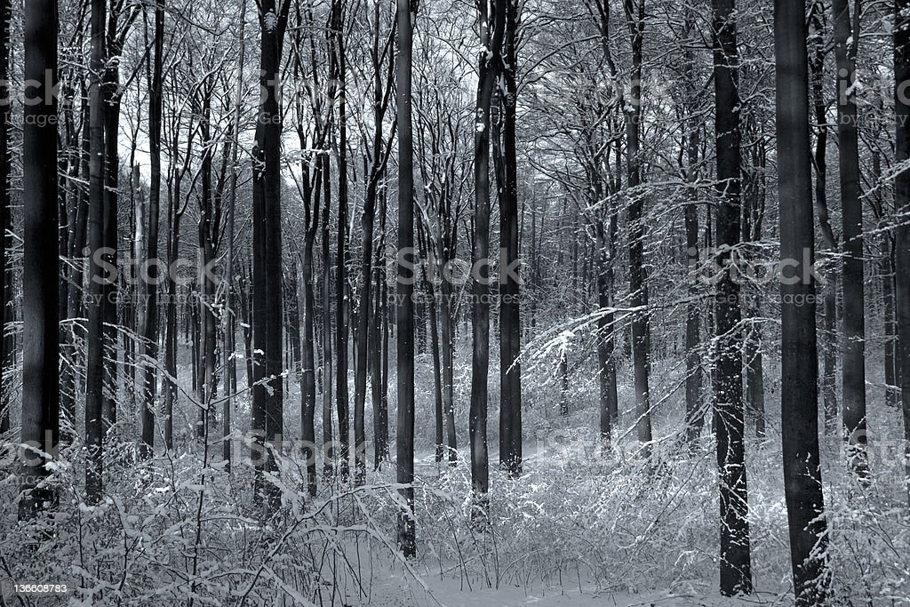 Winter Forest black & white royalty-free stock photo