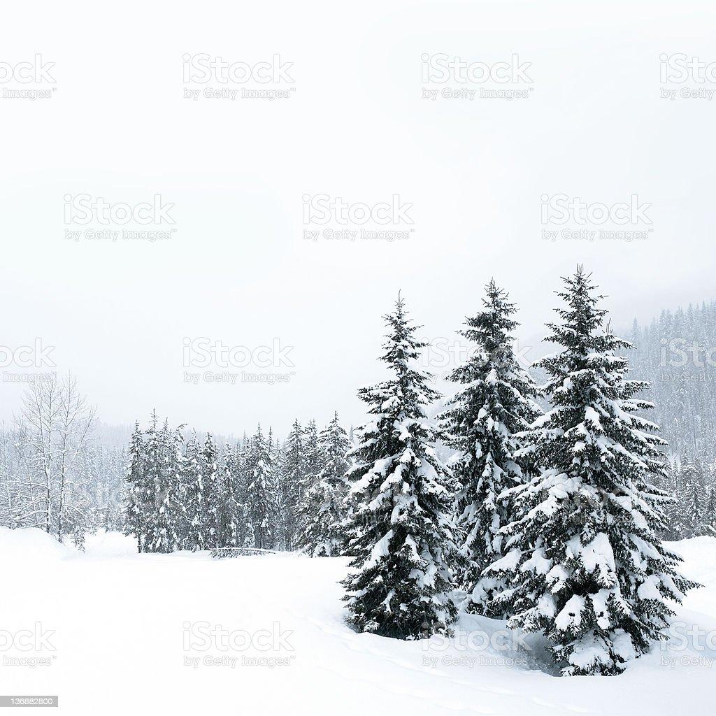 XXL winter forest blizzard stock photo