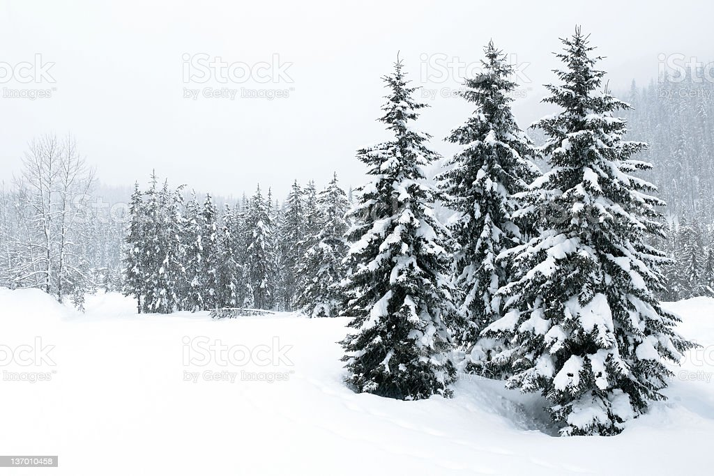 XL winter forest blizzard stock photo