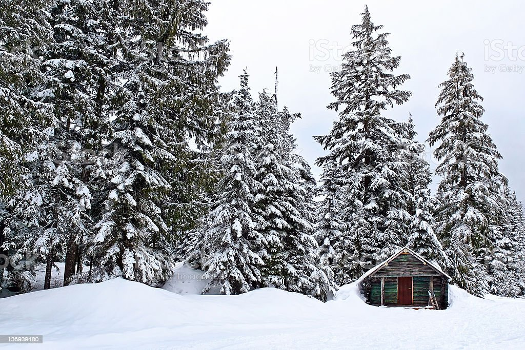 winter forest cabin stock photo