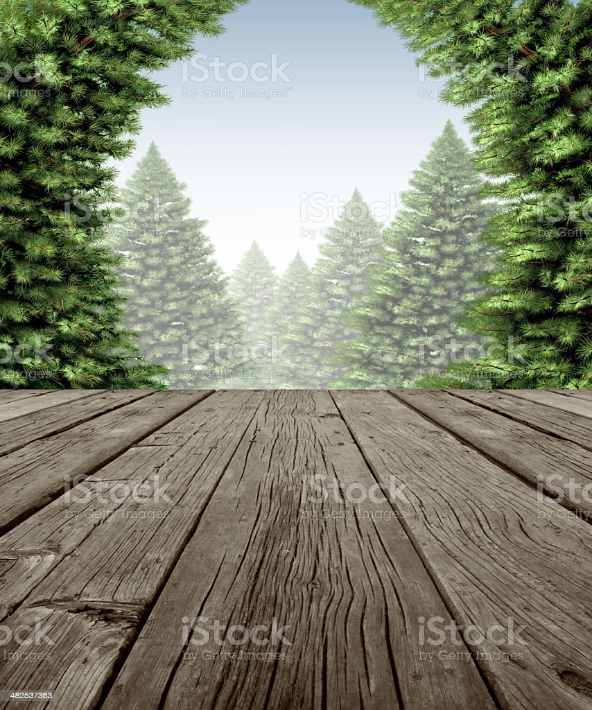Winter Forest Deck Frame stock photo