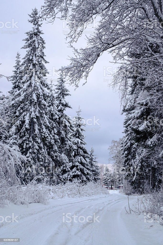 Winter forest Europe stock photo