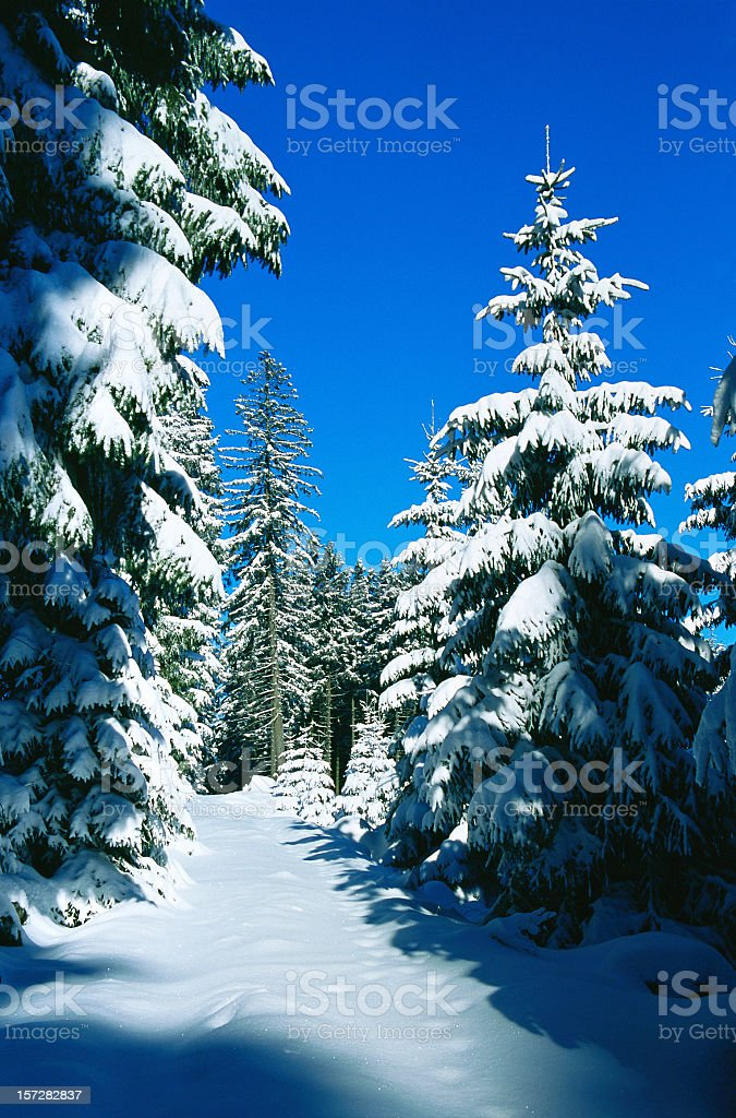 Winter Forest II royalty-free stock photo
