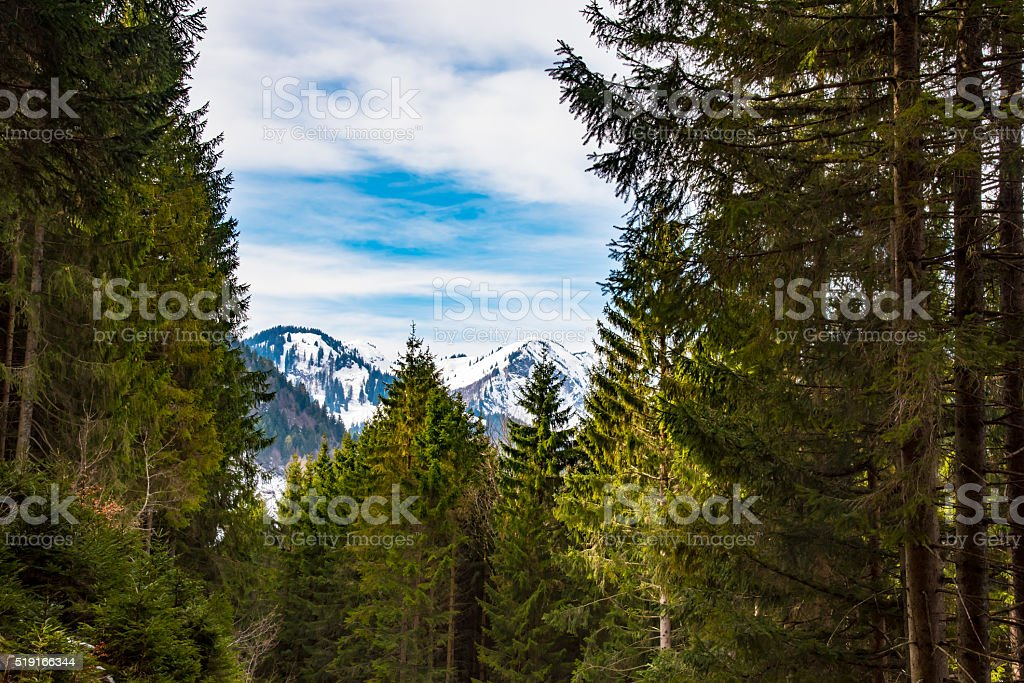 Winter forest in Alps stock photo