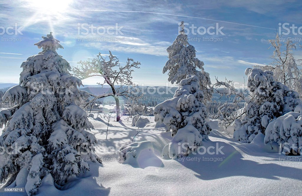 Winter forest in backlight stock photo