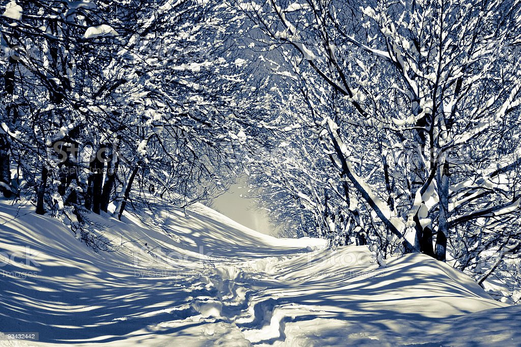 Winter forest in black and white royalty-free stock photo