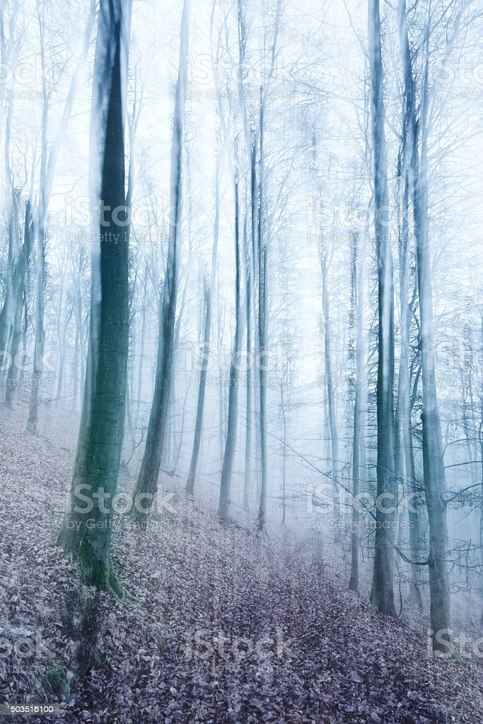 Winter Forest in Fog, blurred motion, nostalgic color and grain stock photo