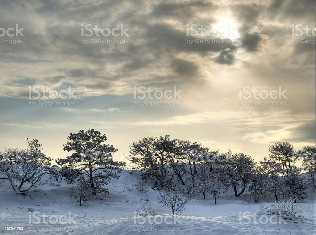 Winter forest in HDR. stock photo