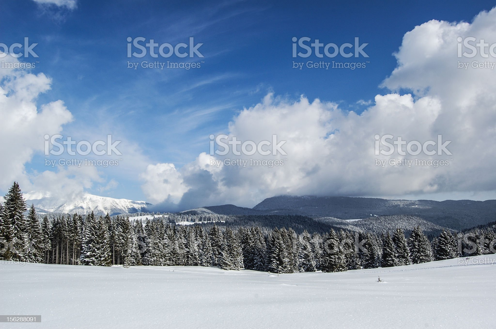 Winter Forest in Italy royalty-free stock photo