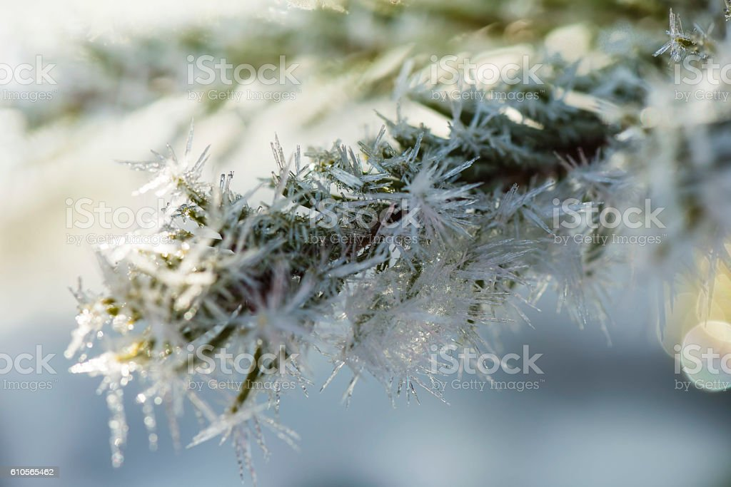 Winter forest in morning stock photo