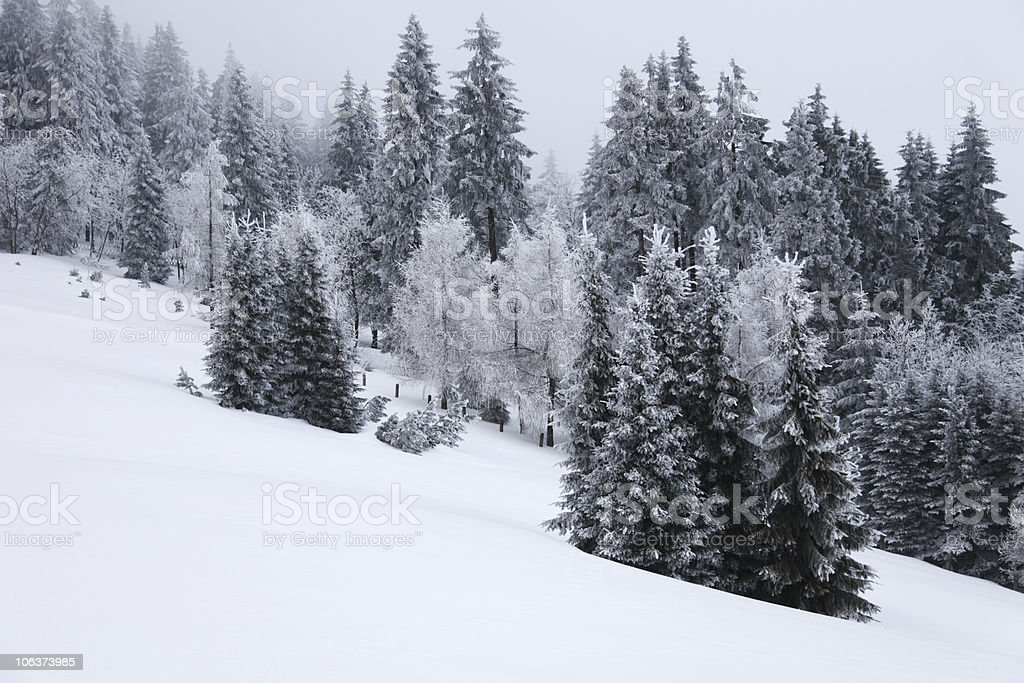 Winter Forest in the fog royalty-free stock photo