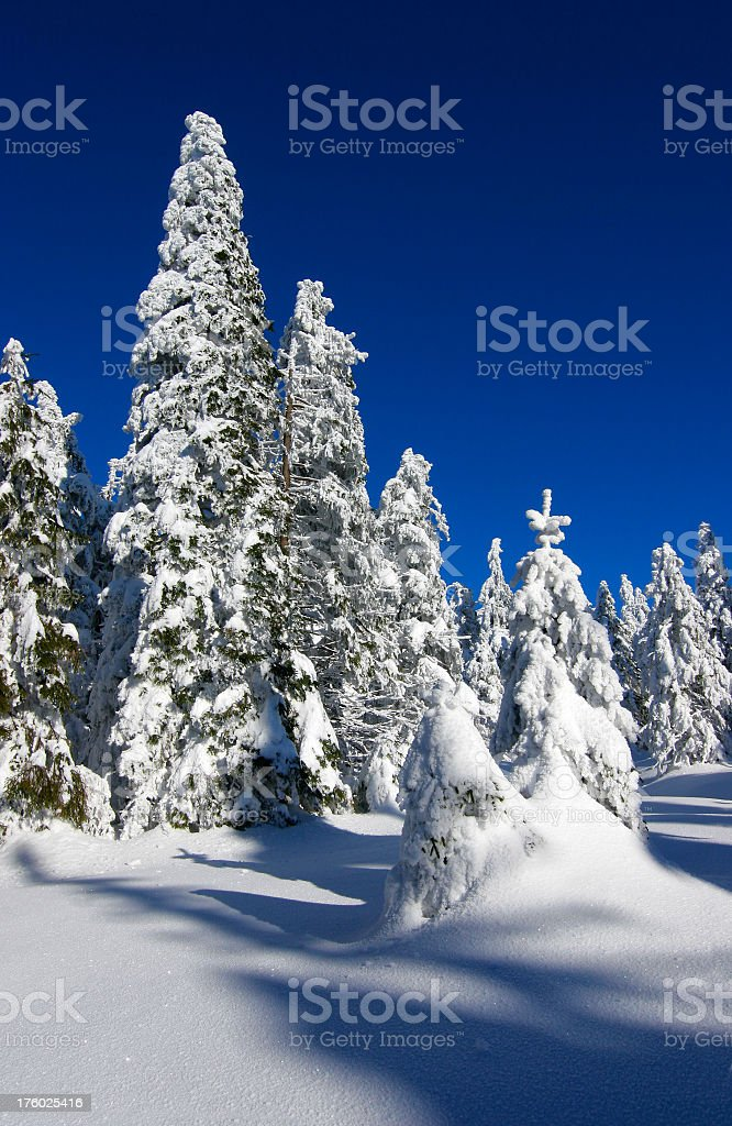 Winter Forest IX royalty-free stock photo