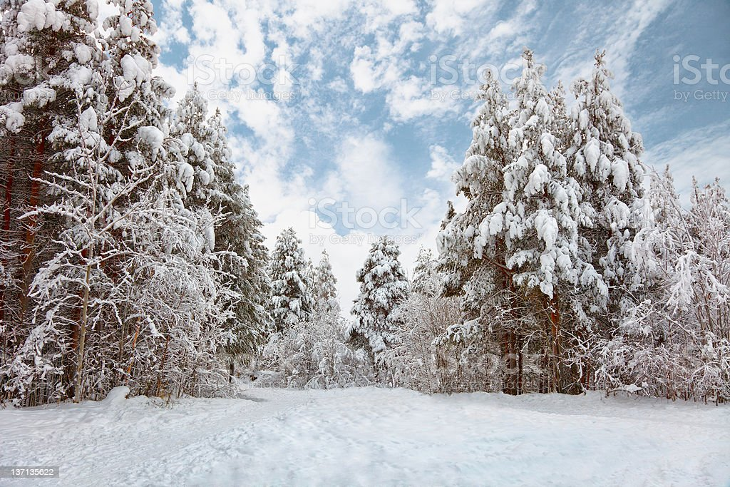 Winter forest landscape royalty-free stock photo