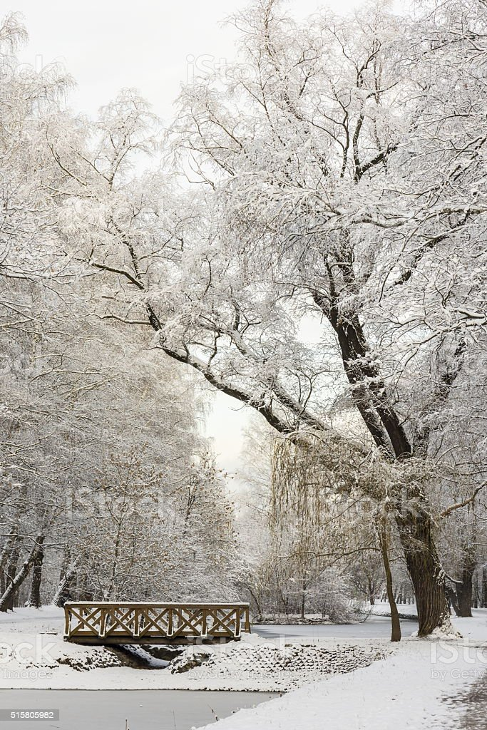 Winter forest landscape. Trees under a thick layer of snow stock photo
