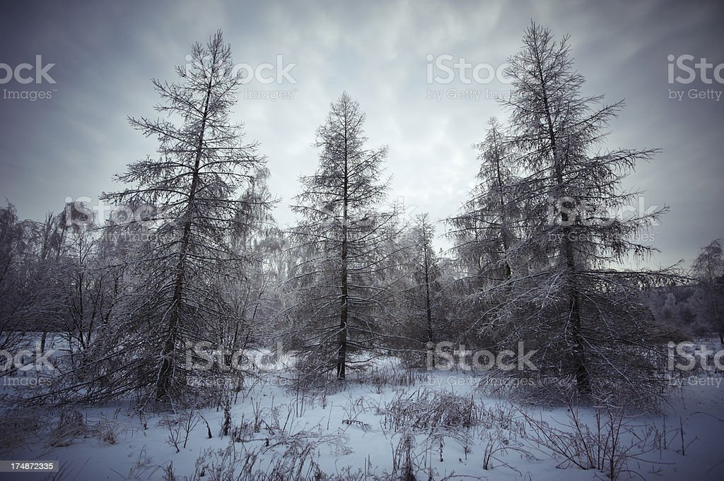 winter forest night royalty-free stock photo