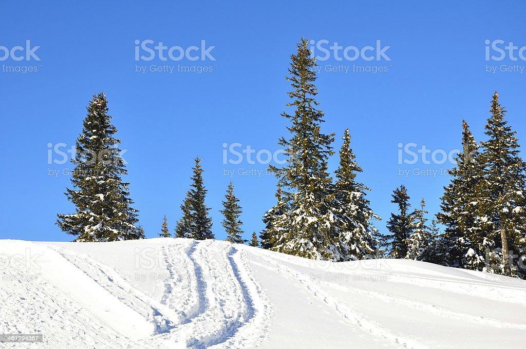 Winter forest on Schneeberg in Austria, Europe stock photo
