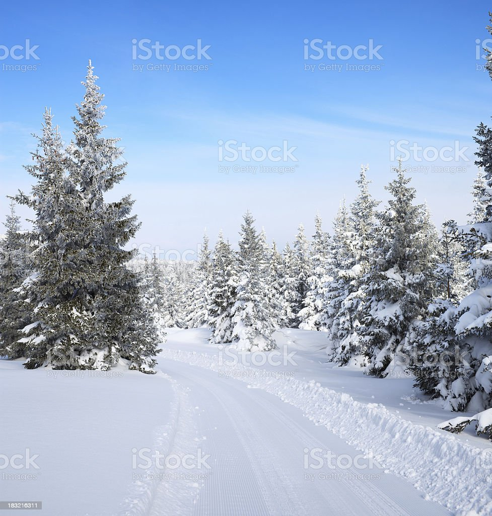 Winter Forest Path royalty-free stock photo