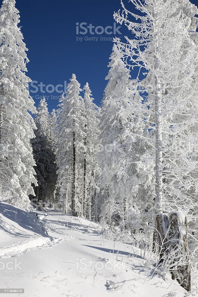 Winterwald royalty-free stock photo