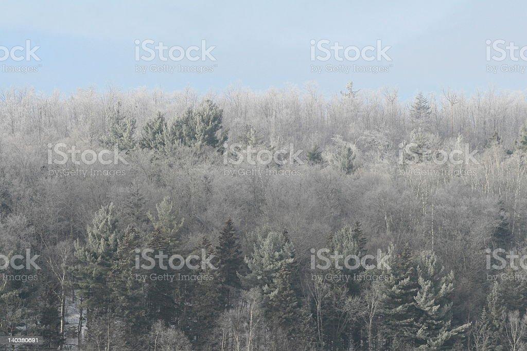Forêt d'hiver photo libre de droits