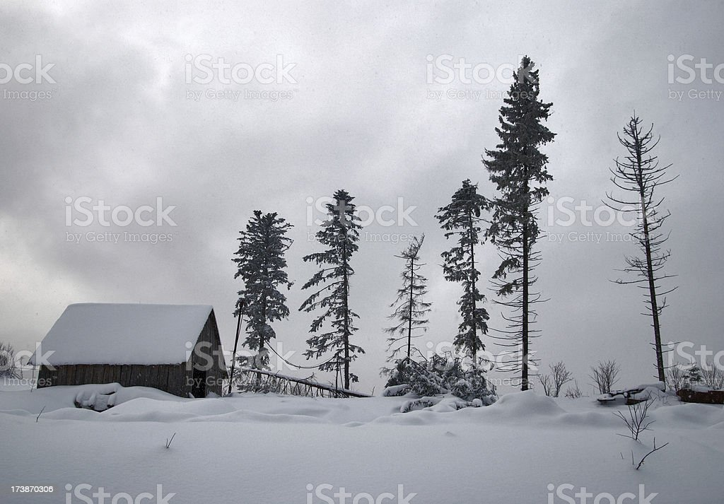 winter forest royalty-free stock photo