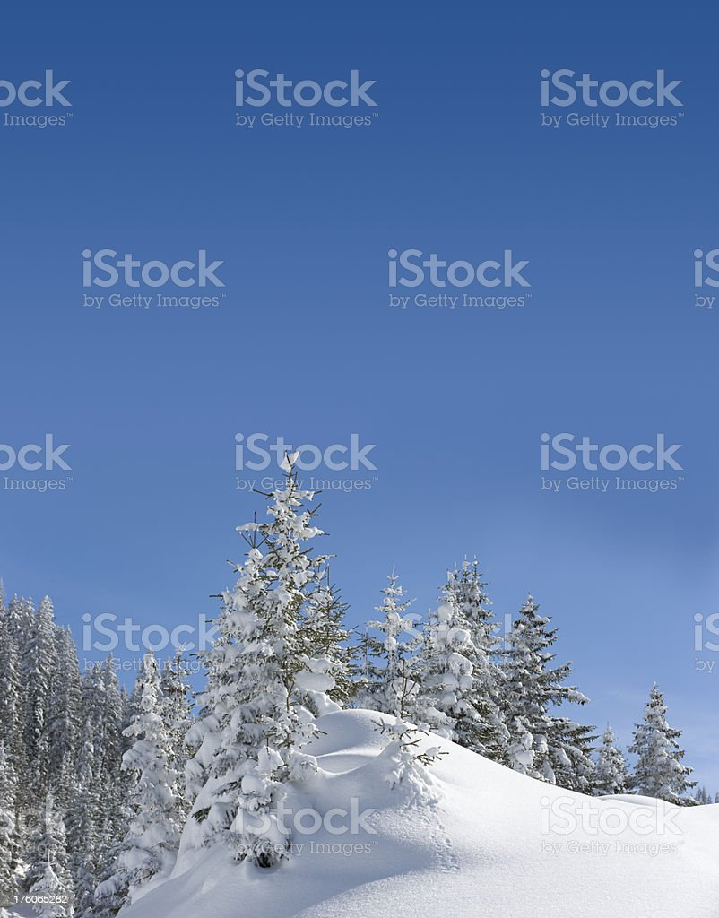 Winter forest (image size XXXL) stock photo