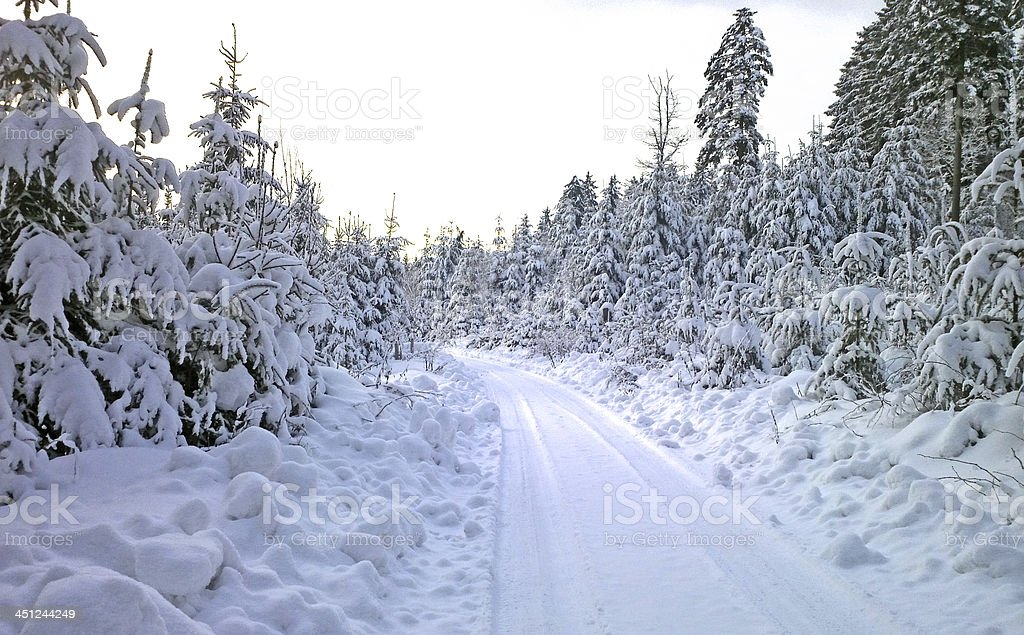 Winterwald stock photo