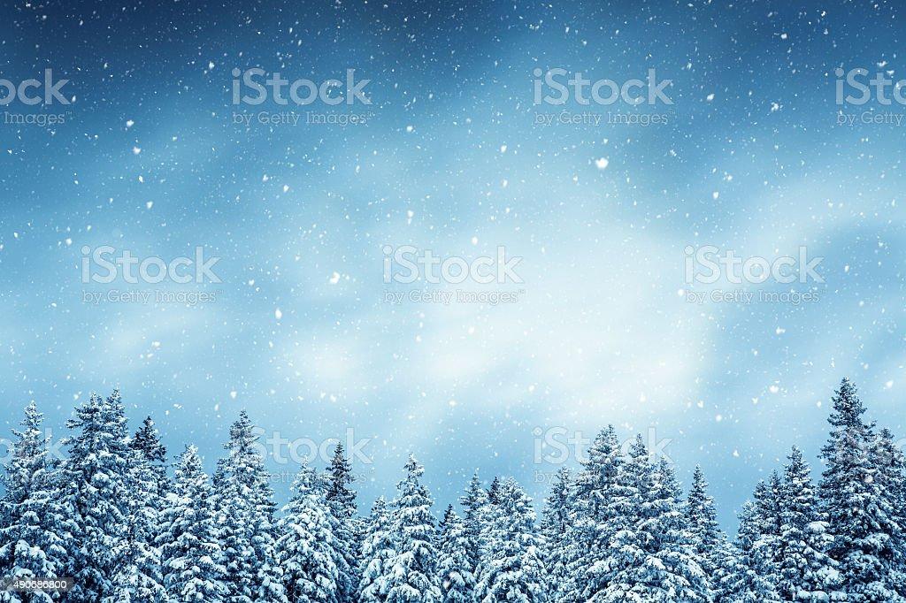 Floresta de Inverno - fotografia de stock