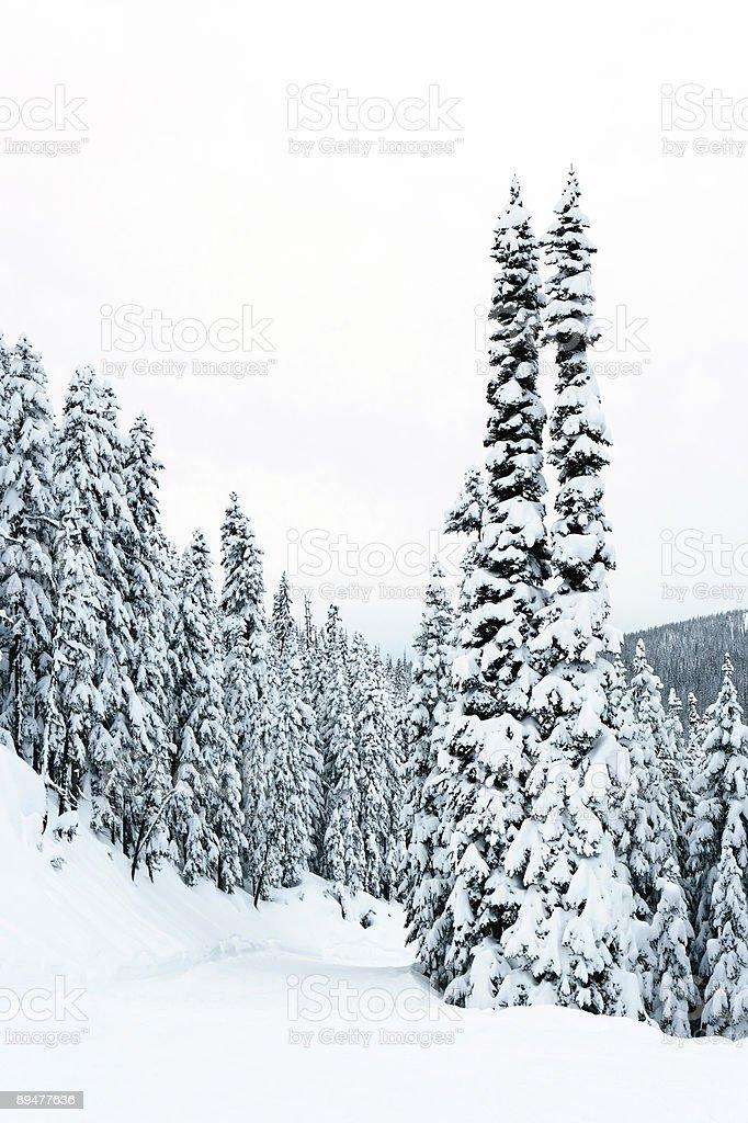 XXL winter forest stock photo