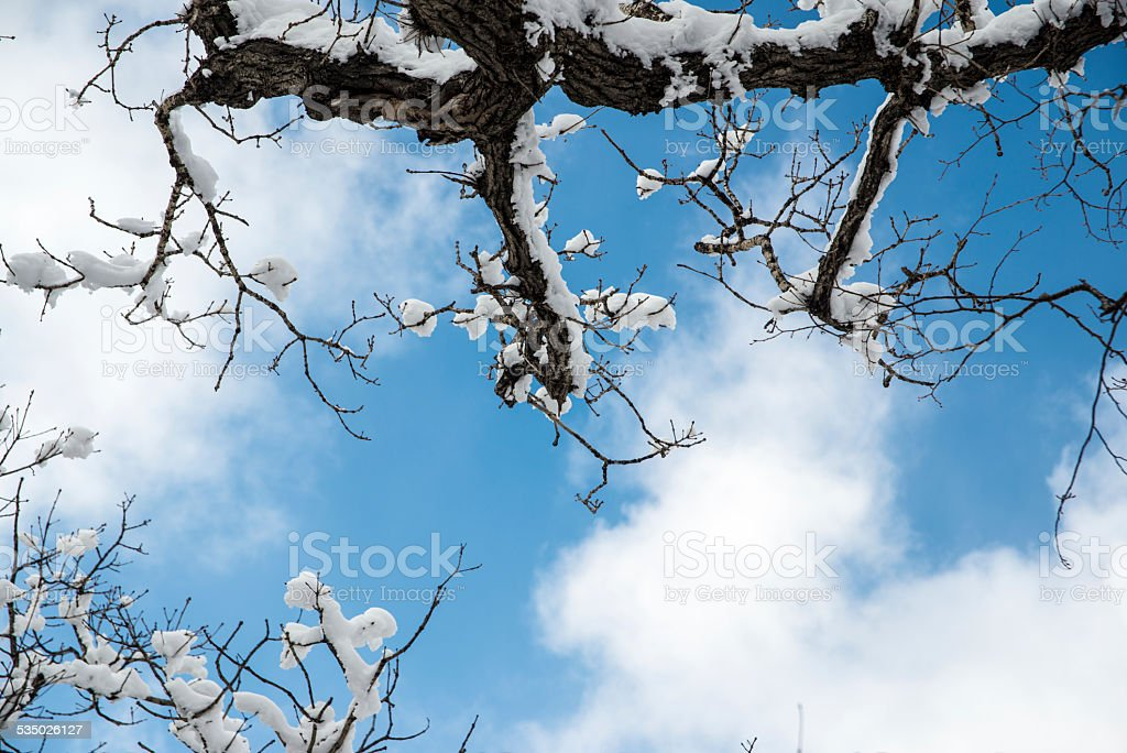 Zimowy Las Scena zbiór zdjęć royalty-free