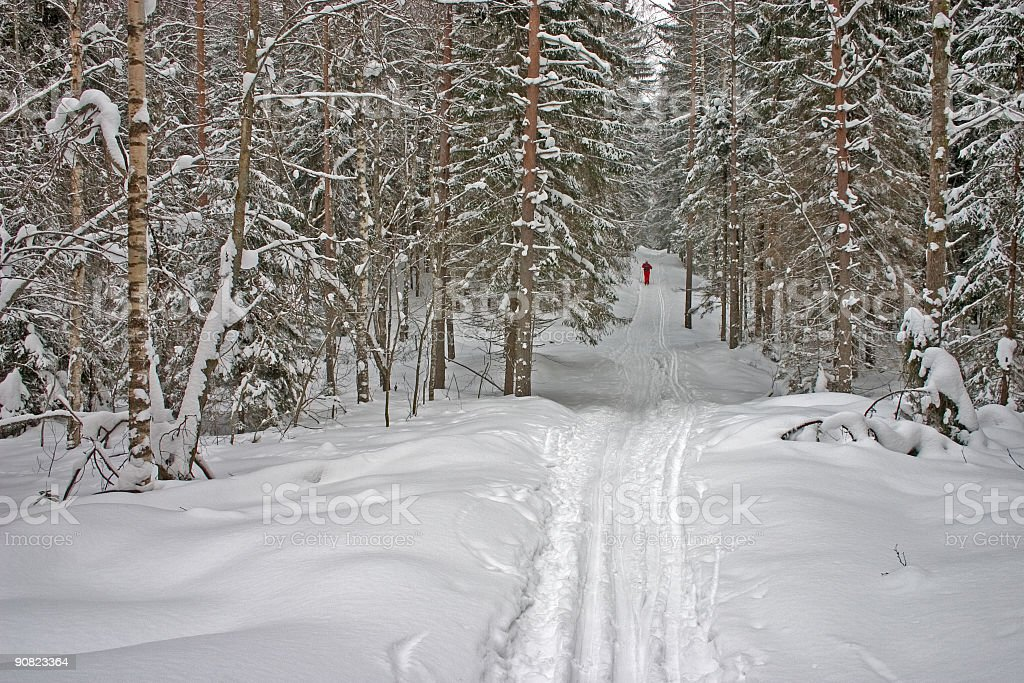 Winter Forest. Skier royalty-free stock photo