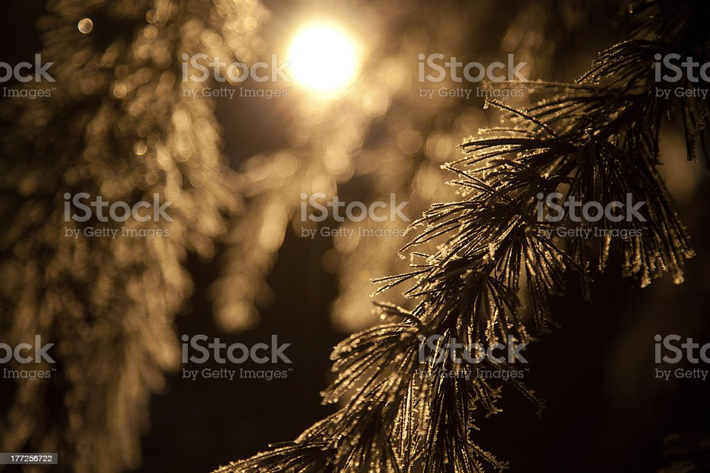 Winter forest sunset royalty-free stock photo