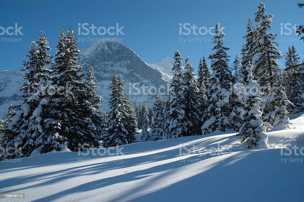 Winter Forest, Switzerland royalty-free stock photo