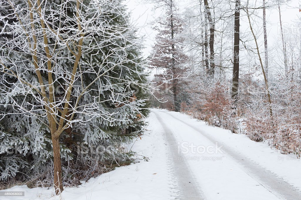 Winter forest trail stock photo