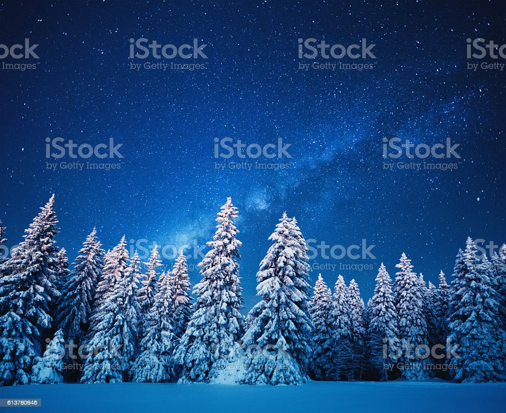Winter Forest Under The Stars stock photo