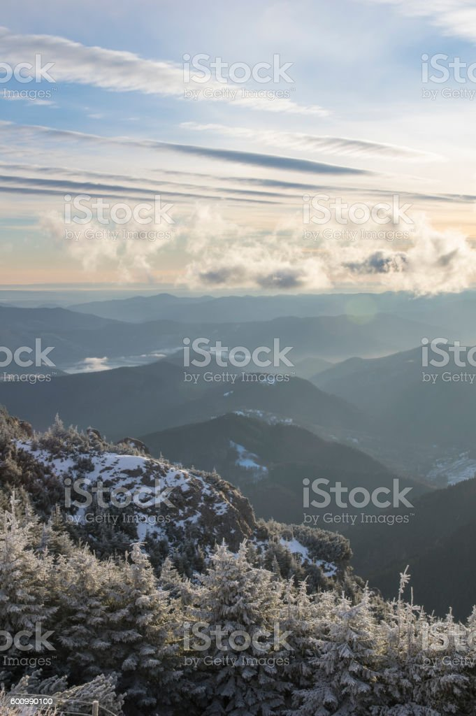 Winter forest valley stock photo