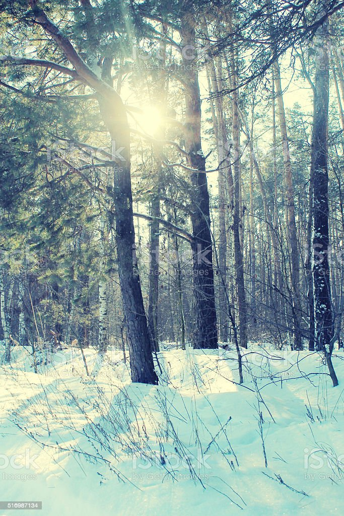 Winter forest. Vintage toned image stock photo
