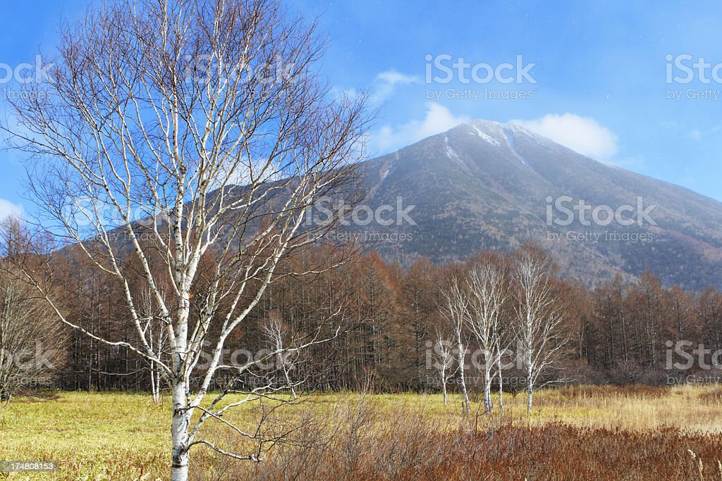 winter forest with mountain stock photo
