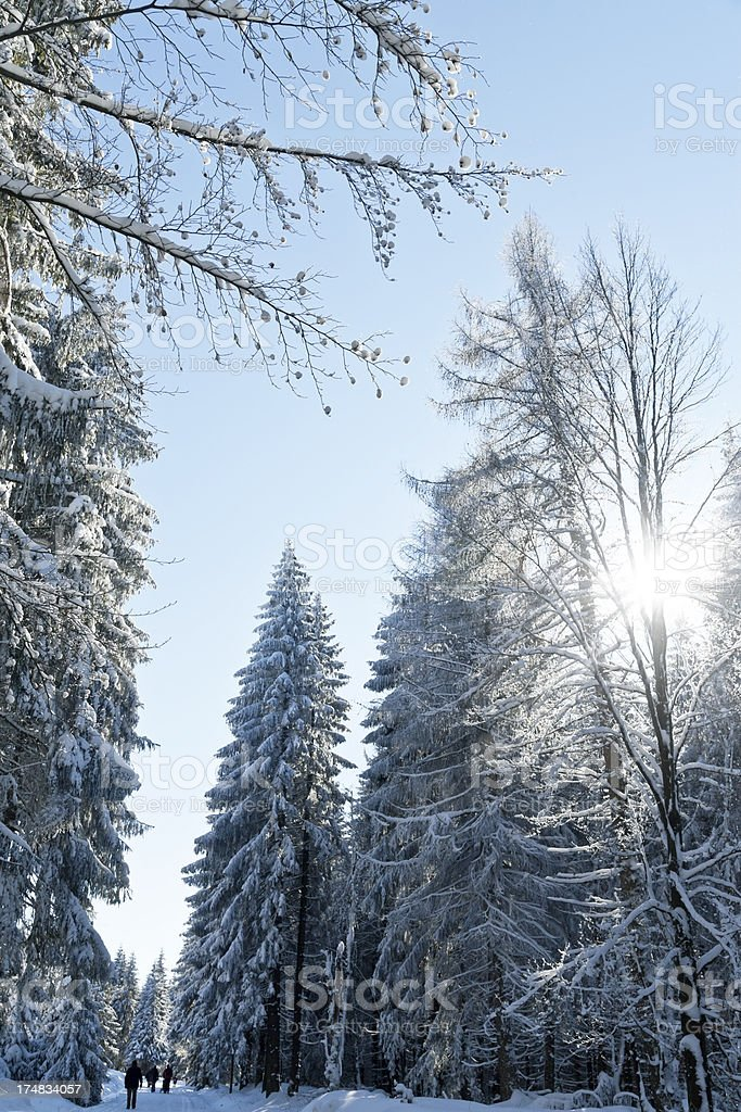 Winter Forest With Sun Reflection royalty-free stock photo