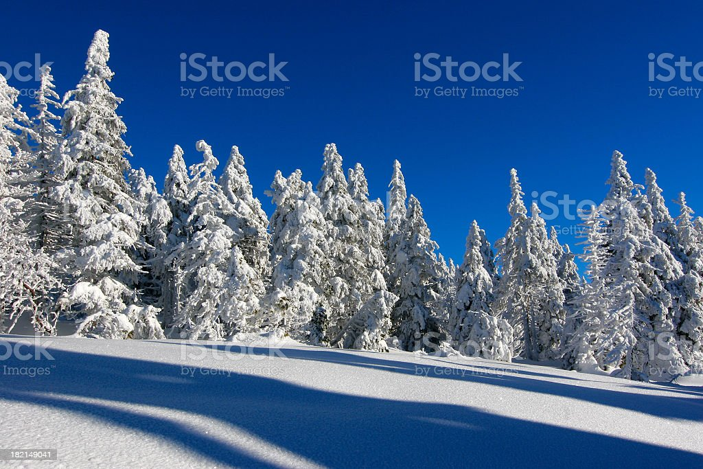Winter Forest X royalty-free stock photo